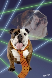 Bulldog - 80's Laser Background - Yesteryay