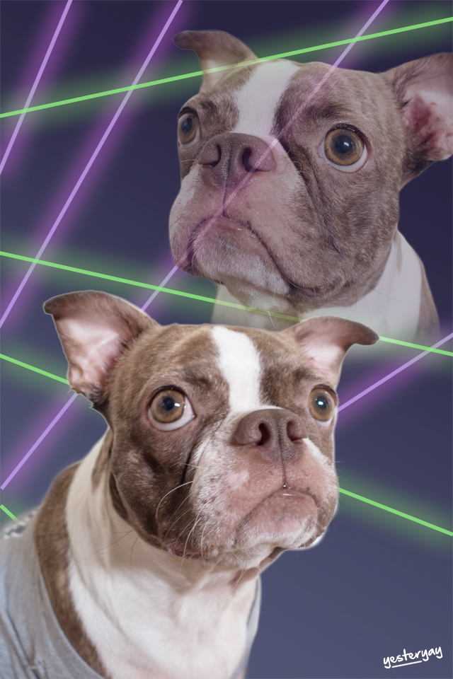 80's Laser Background - Boston Terrier- Yesteryay